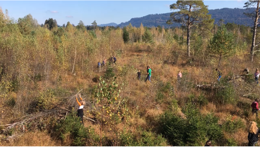 Wahlfach Klimaschule – Baumfällung im Werdensteiner Moos
